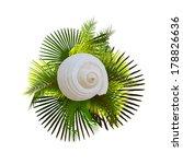 shell on palm leaves. vector    Shutterstock .eps vector #178826636