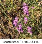 Amazing Purple Wildflower...