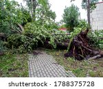 Tree Uprooted During A Strong...