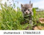 Portrait Of A Little Kitten In...
