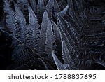 Frosty Fern Up In The Mountain...