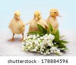 three little yellow fluffy... | Shutterstock . vector #178884596