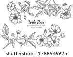 wild rose flower and leaf hand... | Shutterstock .eps vector #1788946925