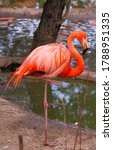 A Pink Flamingo Stands Near The ...
