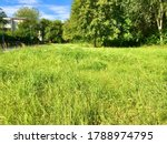 A Lush Meadow So Close To An...