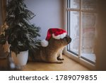 Steppe Marmot In Christmass Hat....