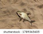 Fish Caught In The Sea. Succes...