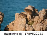 A Hyrax Family Sitting On The...