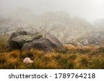 Mist rolling over brown green grass growing near lichen covered rocks, typical scenery seen in Andringitra national park, during trek to pic Boby - stock photo