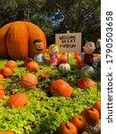 Charlie Browns Great Pumpkin...