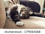 Stock photo fluffy domestic cat stretching on the sofa 179064368