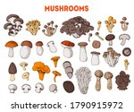 edible mushrooms hand drawn.... | Shutterstock .eps vector #1790915972
