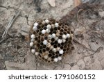Wasp Nest Thrower In The...