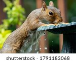 Squirrel Up On The Fountain For ...