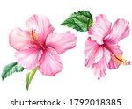 Hibiscus Set  Isolated White...