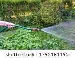 Watering A Lush Green Garden...