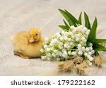 easter little yellow fluffy... | Shutterstock . vector #179222162