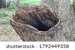 Tree Hollow  In Banyan Or Ficus ...