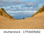 A Crow Standing On A Sand Dune  ...