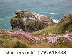 Sea Thrift And Cormorant's Rock ...