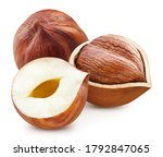 Hazelnuts . Group Of Filberts...