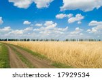 rural road near the field with a wheat - stock photo