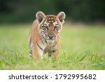 Cute Tiger Baby Portrait Outdoor