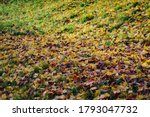 Image Of Fallen Leaves In Autumn