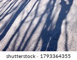 Shadows Of Tree Trunks On Snow...