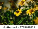 Yellow Gerber Daisies With Busy ...