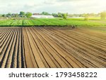 The farm's field is processed with agricultural machinery. Tractor with milling machine loosens, grinds, mixes soil. Farming and agriculture. Loosening surface, cultivating land for planting. - stock photo