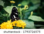 Insect  Wildlife  Germany   A...