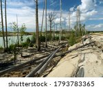 Deforestration. The Impact Of...