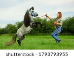 The Caucasian woman and gray pony are in rural. The adult horsewoman is holding the colored rope and the whip in her hands and training the young stallion.