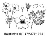 A Set Of Flower Details Of...