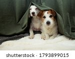 Two Scared Or Afraid Puppies...