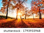 Autumn Scenery With Gold...