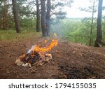 Burning Camp Fire.fire Place I...