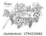 grapes fruit hand drawn... | Shutterstock .eps vector #1794225682