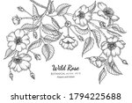 wild rose flower and leaf hand... | Shutterstock .eps vector #1794225688
