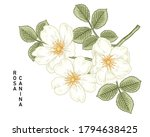 sketch floral decorative set.... | Shutterstock .eps vector #1794638425
