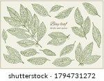 bay leaf. botanical hand drawn... | Shutterstock .eps vector #1794731272