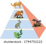 Ecology Animal Food Pyramid...