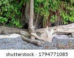 Diverse Driftwoods At A Beach...