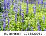 beautiful flowers background.... | Shutterstock . vector #1795530052