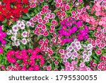 beautiful flowers background.... | Shutterstock . vector #1795530055