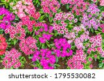 beautiful flowers background.... | Shutterstock . vector #1795530082