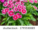 beautiful flowers background.... | Shutterstock . vector #1795530085