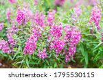 beautiful flowers background.... | Shutterstock . vector #1795530115