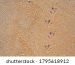 Bird Tracks Or Footprints On...